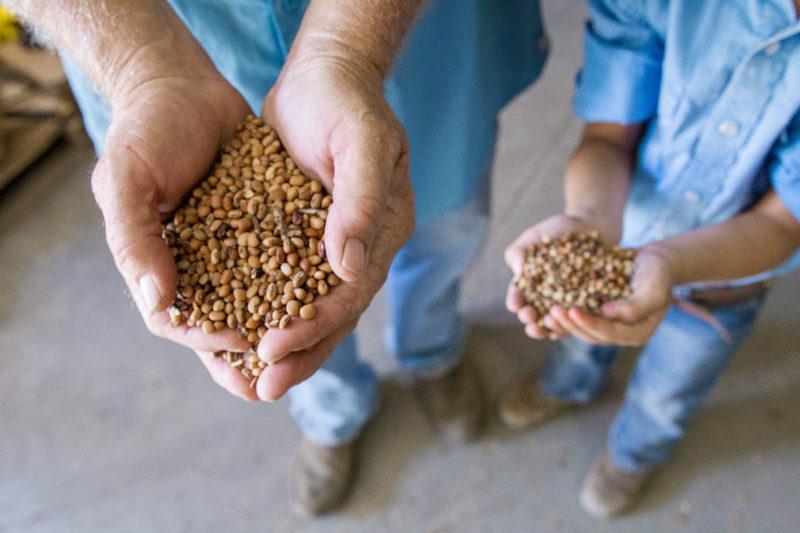 hands holding millet