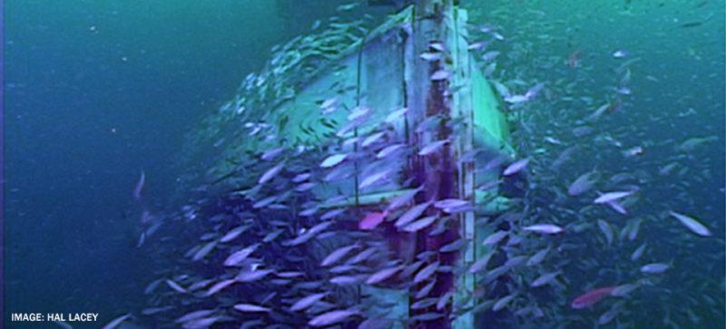 school of fish swimming near ship at bottom of ocean