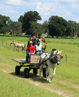 kids being pulled on cart by horse