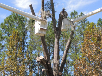 linemen in bucket trucks working on power poles