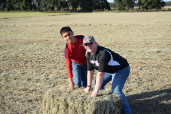 kids loading hay bales