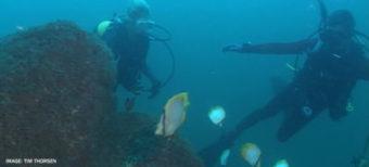 divers in ocean