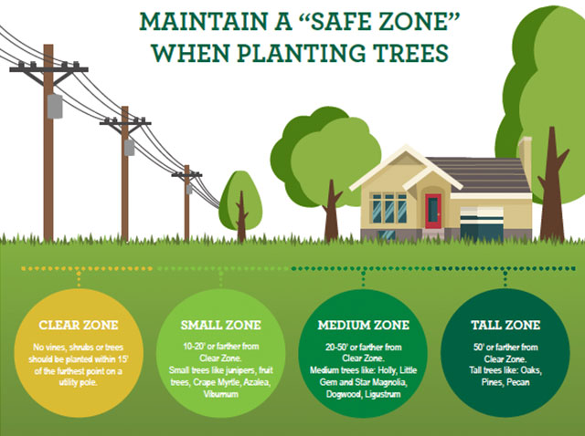 Maintain a Safe Zone when planting trees. Clear Zone = no vines, shrubs, or trees should be planted within 15 feet of the furthest point on a utility pole. Small Zone = 10-20 feet or farther from Clear Zone. Small trees like junipers, fruit trees, Crape Myrtle, Azalea, Vibumum. Medium Zone = 20-50 feet or farther from Clear Zone. Medium trees like Holly, Little Gem, Star Magnolia, Dogwood, Ligustrum. Tall Zone = 50 feet or farther from Clear Zone. Tall trees like Oaks, Pines, Pecan.