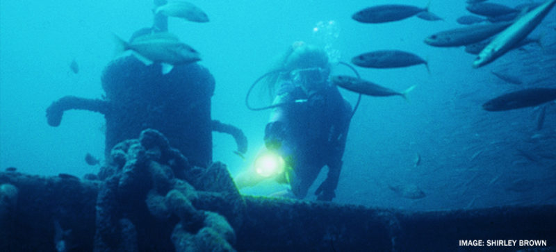 divers next to fish and boat