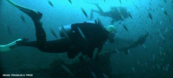 divers swimming with fish around them
