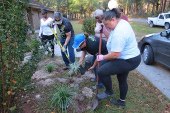 volunteers digging plants outside